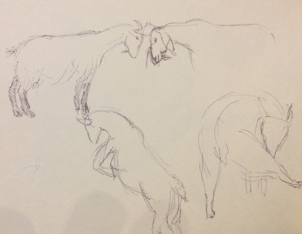 Rough sketches of goats
