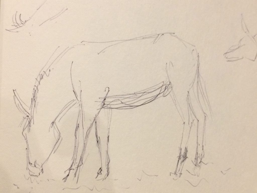 Rough sketch of a donkey
