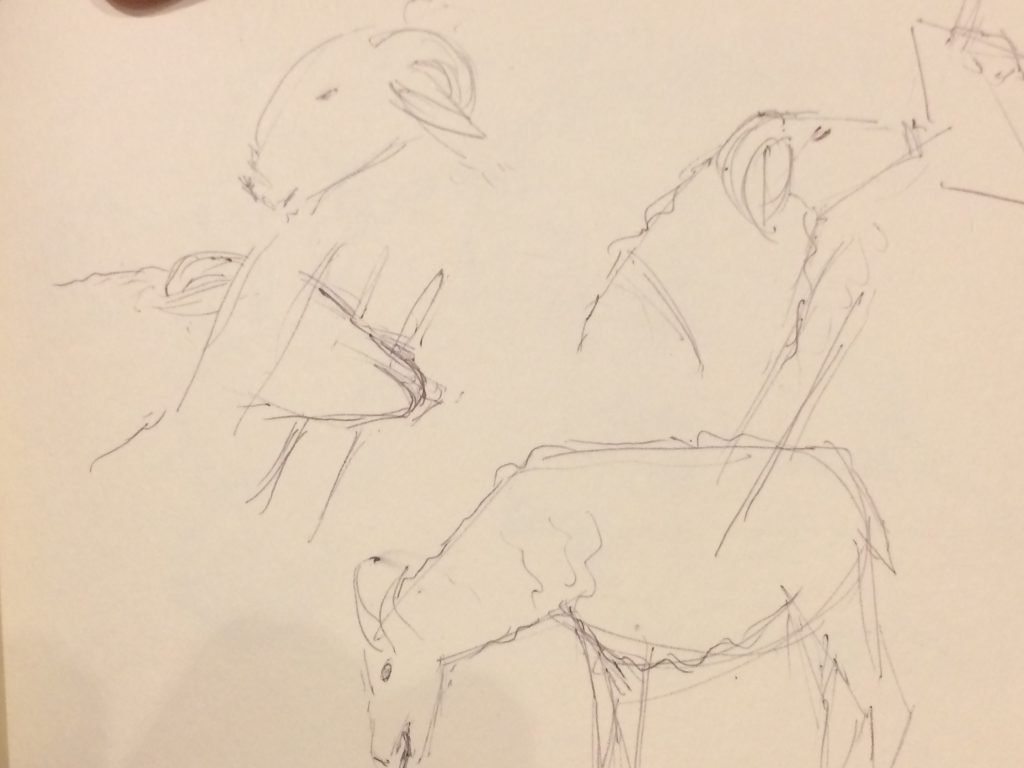 Rough sketches of sheep