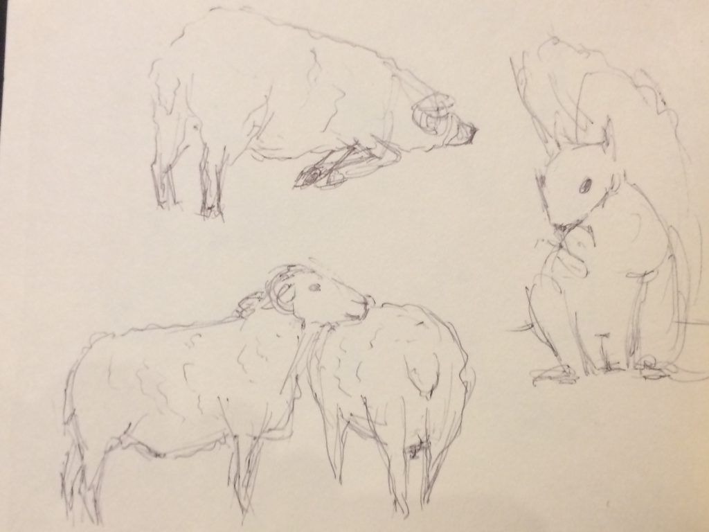 Rough sketches of sheep and a squirrel