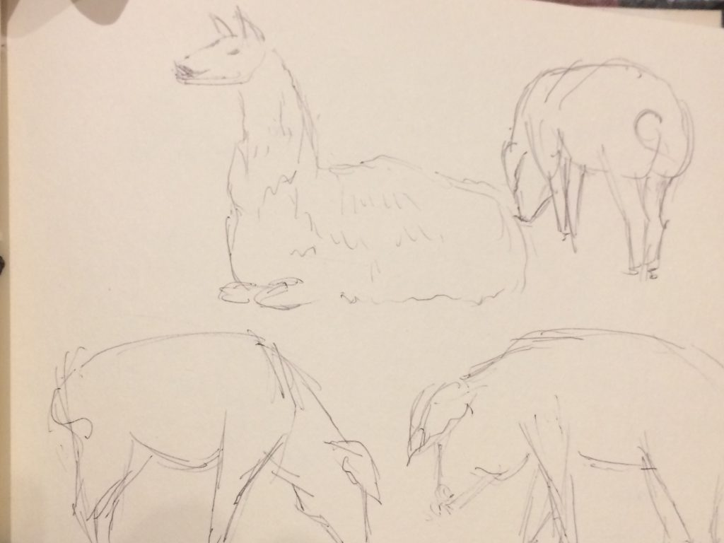 Rough sketches of pigs and a llama