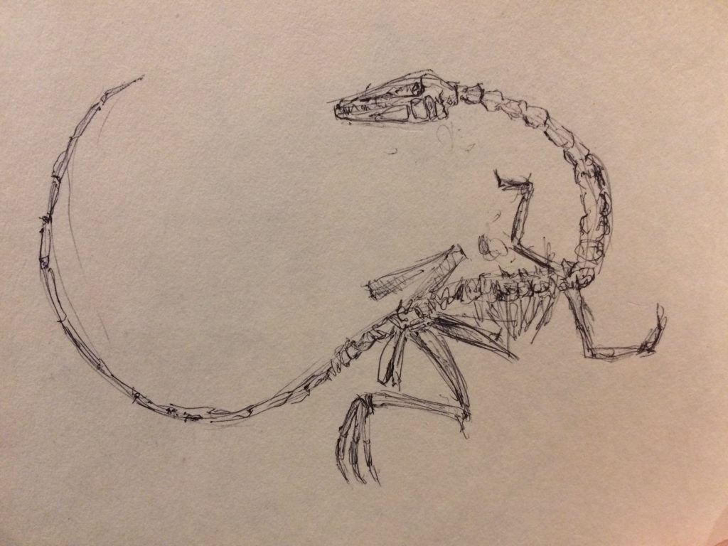 Rough sketch of a raptor fossil