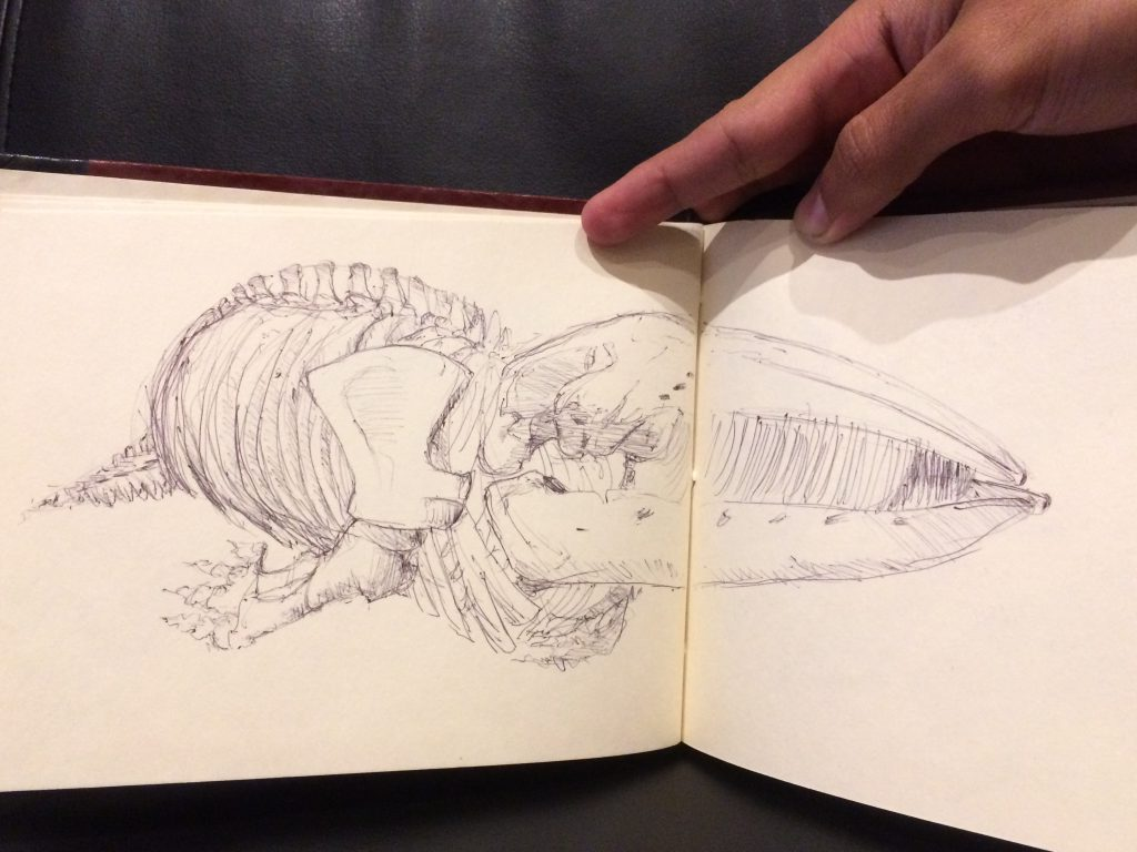 Rough sketch of a whale skeleton