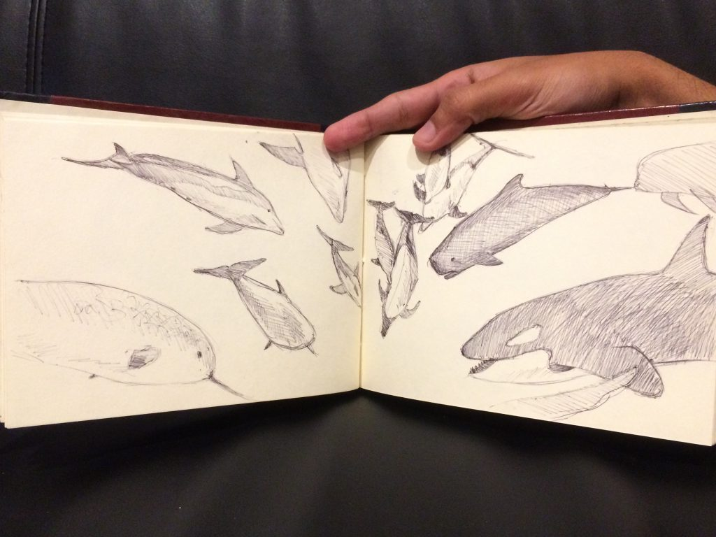 Rough sketch of dolphin and whale models