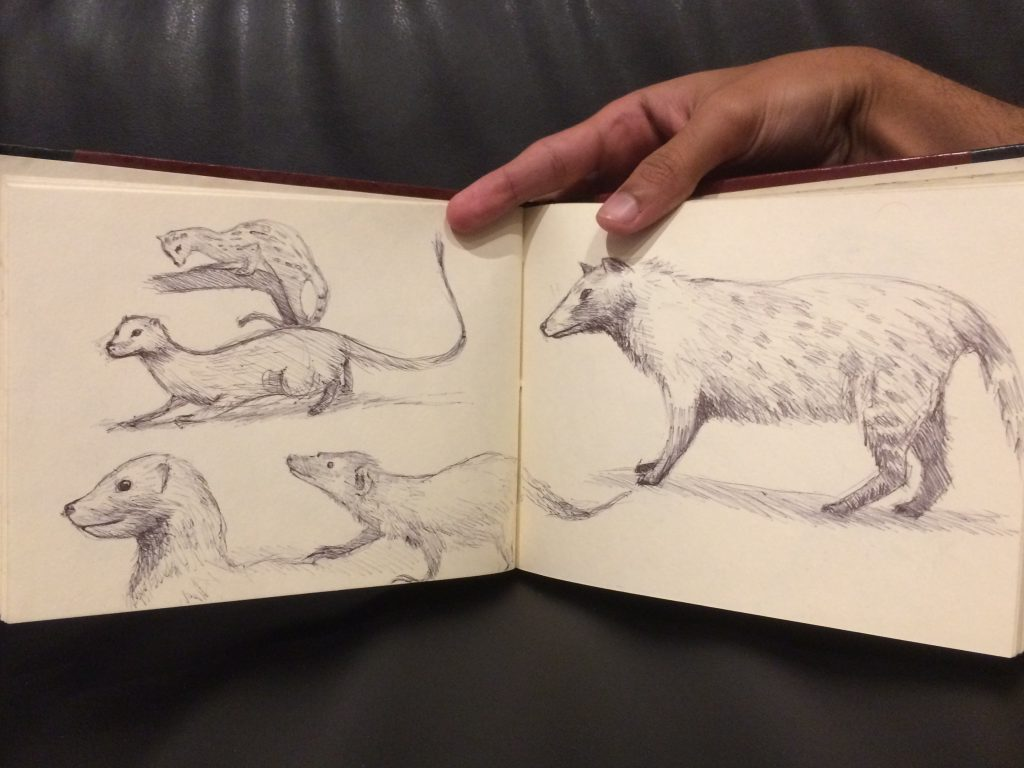 Rough sketches of small mammals